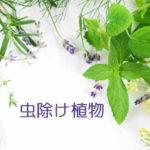 虫除け植物…置くだけで効果バツグン!料理にもOK!