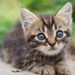 猫の毛の色、種類で猫の性格は何で決まるってホント?