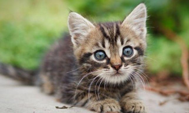 猫の性格について