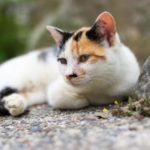 ビックリ!希少な三毛猫のオス 「価値は2000万円」という説