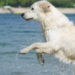 清潔な飼い犬でも濡れるとクサい理由
