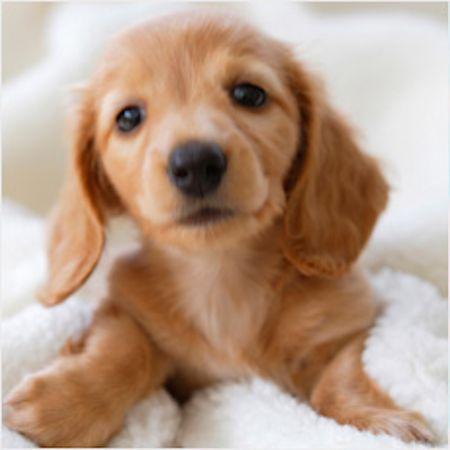 2.犬の長寿の秘訣