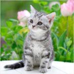 動物の「ふわふわ・もふもふ」が好きな理由とその心理