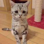"""抱きしめたい猫。放っておけない!""""悲しい顔""""のニャンコ"""