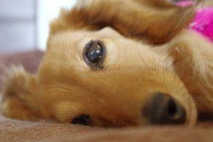 危険から愛犬を守る