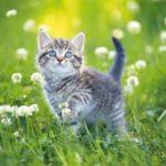 猫が水を苦手な理由って何?