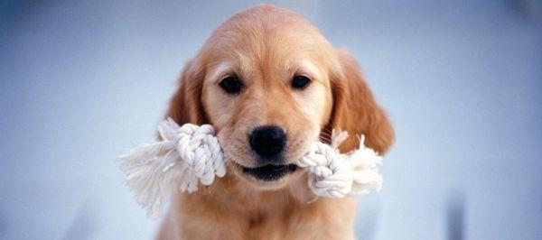 犬の平均寿命