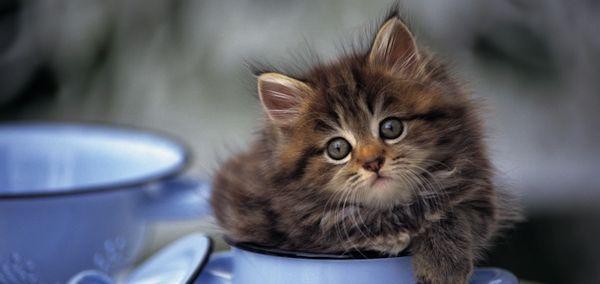 猫に関する豆知識