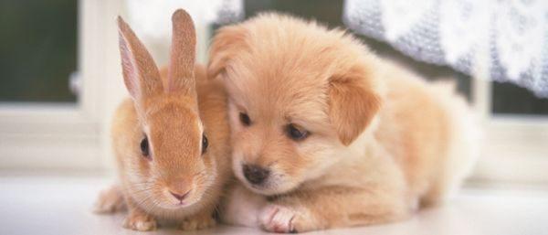動物と暮らす心構え