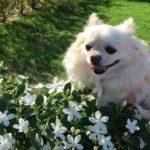 私の愛犬…若葉ちゃんと歩む道