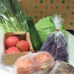 届いた!オーガニック野菜がたっぷり♪ お試し野菜セット 50%以上OFFの980円!