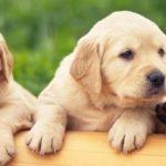 犬の手作り食は「食べてはいけない物」を注意するだけではない!野菜の食べ方