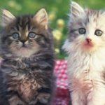 指原莉乃さん発情期でビックリ! かわいい愛猫の成長…猫好き芸能人紹介♪