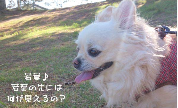 愛犬のペット保険