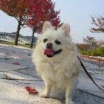 愛犬のごはんを手づくり食…犬猫栄養学レシピの参考書