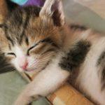 睡眠の質チェックと解決策