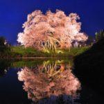 「舞い散る桜のような女性」その心を魅了する「限定品」