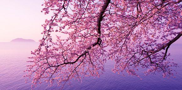 2016年桜開花情報