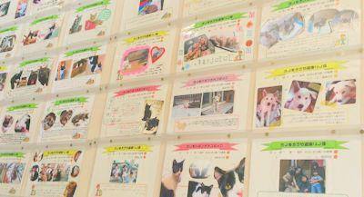 「公共事業・人と動物」を結ぶメッセージボード