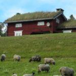 ミニマルライフスタイルと北欧デザインの「センスのいい生活」シンプルの表現