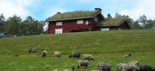 センスのいい生活北欧