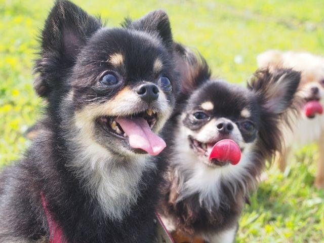 3.犬の長寿の秘訣