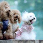 犬の必要な栄養(2)ビタミンの効き目で食材を探して健康的な食生活を!