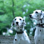犬の必要な栄養(1)効き目で食材を探す5大栄養素プラスワンで目的別に健康な食生活を!