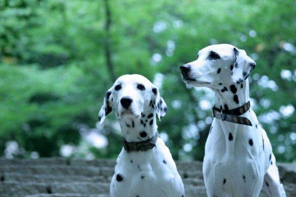 犬の必要な栄養!効き目で食材を探す5大栄養素プラスワンで目的別に健康な食生活を!