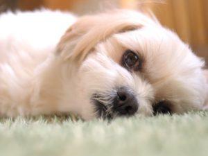 犬の長寿の秘訣?手作り食の不安が解消される便利な補助食品やサプリメントを活用