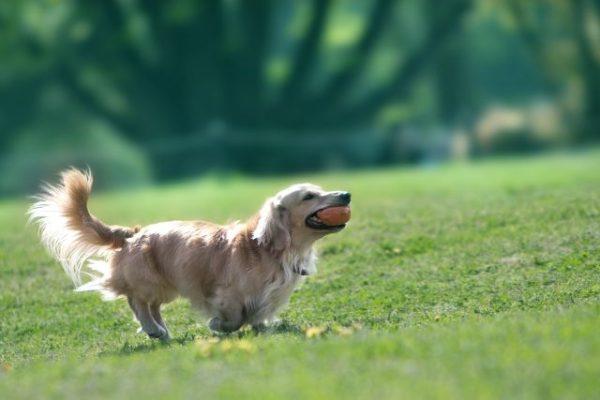 若々しい犬