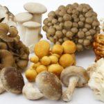 秋が旬の『きのこ』健康と美容の効果別のキノコは何?栄養の成分表から対策!