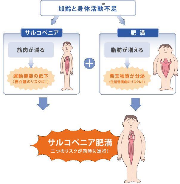 外見が変わらない「サルコペニア肥満」が危険!寝たきり生活習慣病のリスクが上がる30代から注意!
