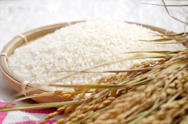 【米アレルギー】お米の品種改良が原因!症状や対策・代替食品とおすすめのお米は?