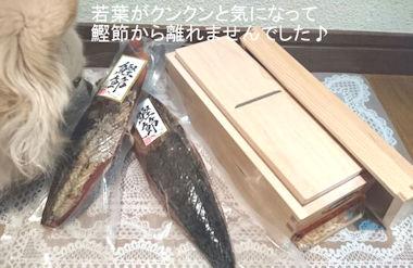 【鰹節-かつおぶし】UMAMI-旨味が日本発トレンドに!「日本人の旨み味覚」未来に託す!