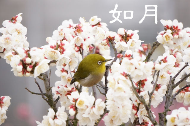 【如月】ていねいに暮らす-2月のくらし「春を迎える自然のエネルギー」と「旬の食材」