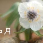 【立春】旧暦のお正月に想う-「春の息吹を感じる心の余裕」を持つと未来が見える