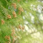 花粉症・アレルギー悪化の季節!食材に気をつける「自力で改善する10の食品」と「デドックス」
