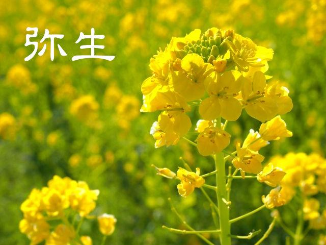 【弥生】ていねいに暮らす-3月のくらしは旬の食材で心と体に活力を!