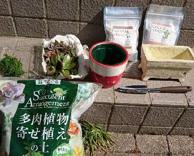 多肉植物の土や植え替え