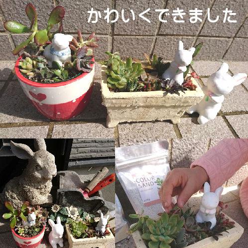 かわいい多肉植物は寄せ植えがカンタン!