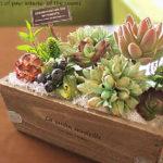 多肉植物のプクプク感がかわいい!人気の植物で彩り豊かな生活空間を!