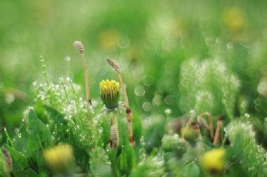 自然の摂理に従った暮らしは先人が残してくれた知恵は宝物