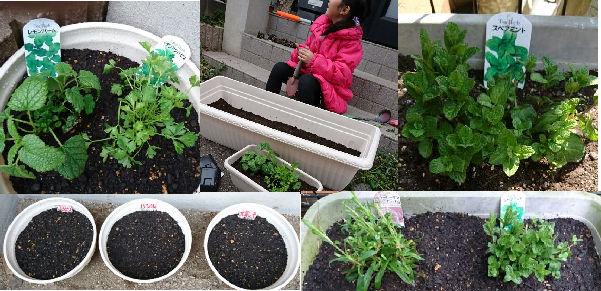 我が家の小さな花壇と野菜