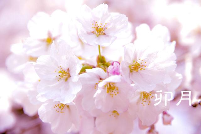 【卯月】ていねいに暮らす-4月は自然界の生命力がみなぎる!散歩をしよう!