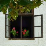 蚊やゴキブリを寄せ付けない植物を飾るロハスな生活!