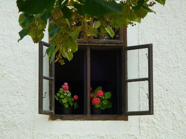 蚊やゴキブリが逃げていく植物を飾って寄せ付けない方法!
