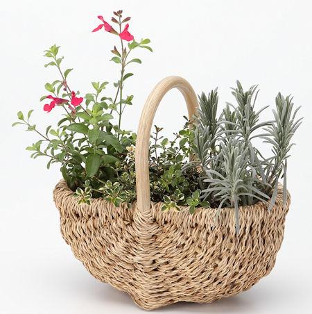 【ネット限定】母の日 ハーブの苗セット ガーデン