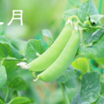 【皐月】ていねいに暮らす-5月の旬の食材には心を整える薬膳を!