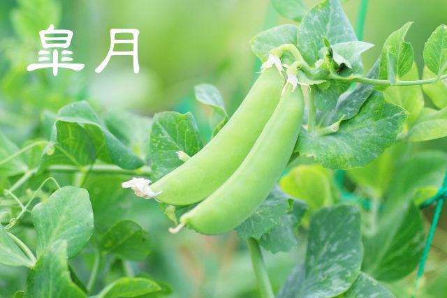 【皐月】ていねいに暮らす-5月の旬の食材には心のアンバランスを整える薬膳